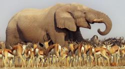 BBC: Африка (2013)